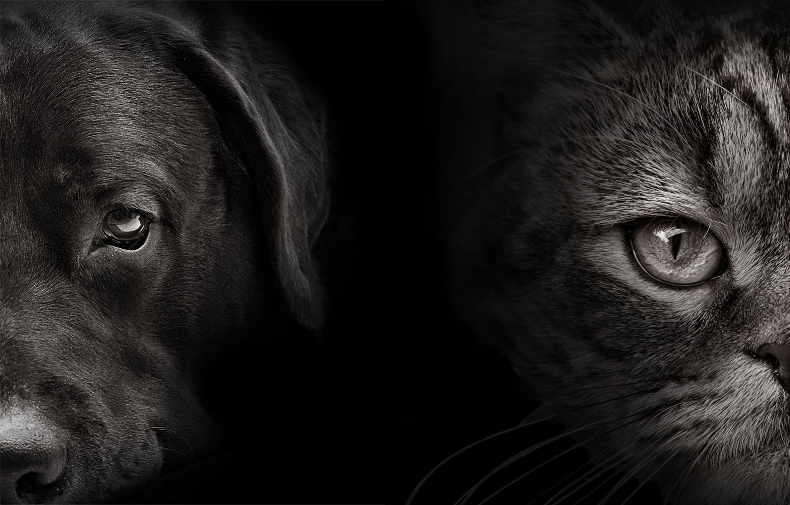 Dog-and-cat-edited